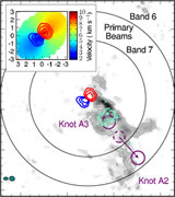 ALMA detection of the rotating molecular disk wind from the young star HD 163296